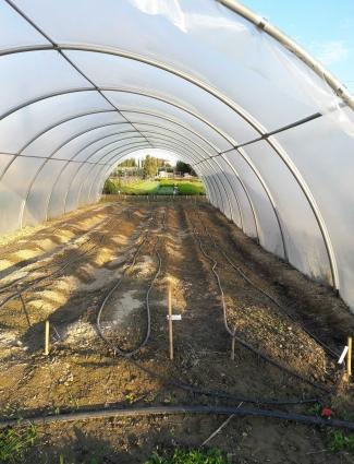 irrigazione a goccia=risparmio acqua